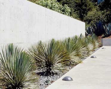 Tiburon Residence - GLS Landscape | Architecture modern-landscape