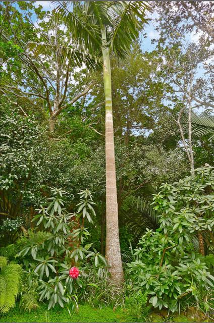 Titirangi project tropical-landscape