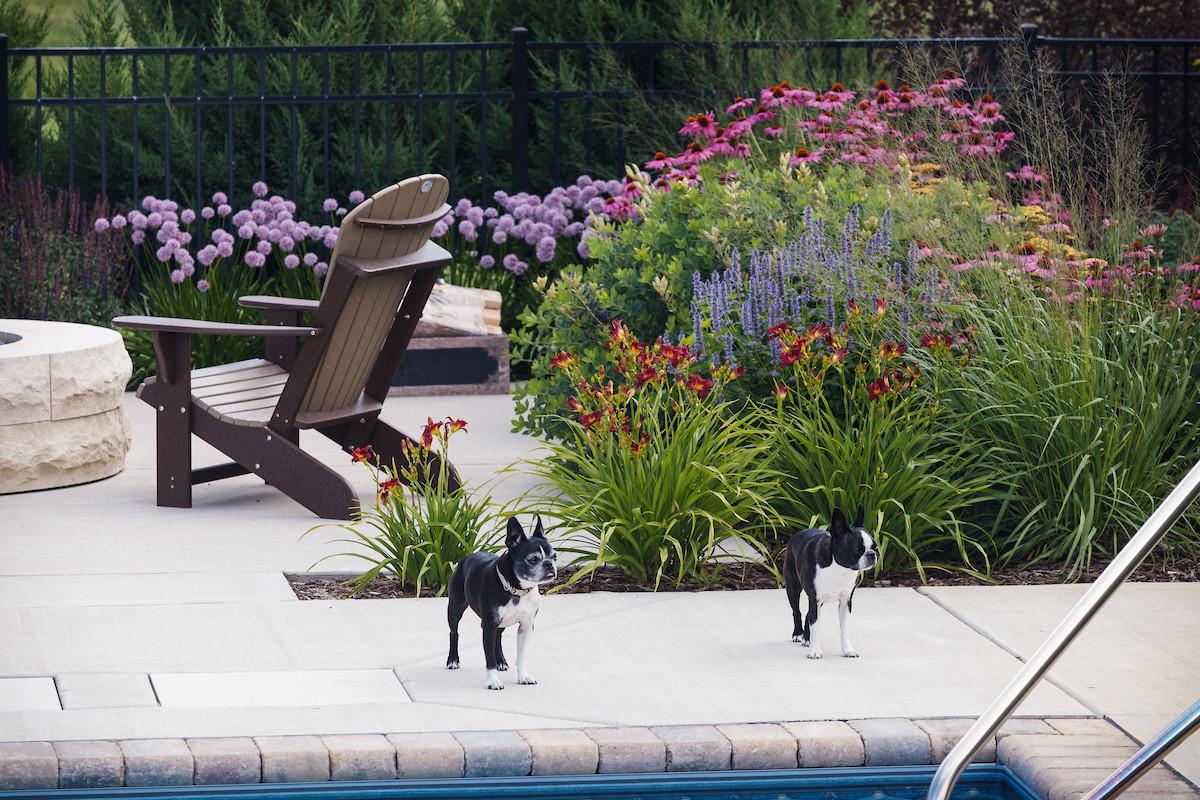 Traditional Pool & Dogs - Cedarburg