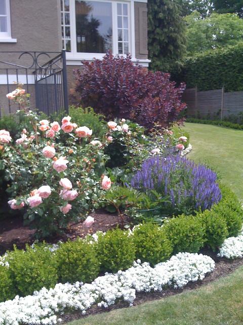 Traditional roses and lavender traditional landscape for Rose landscape design