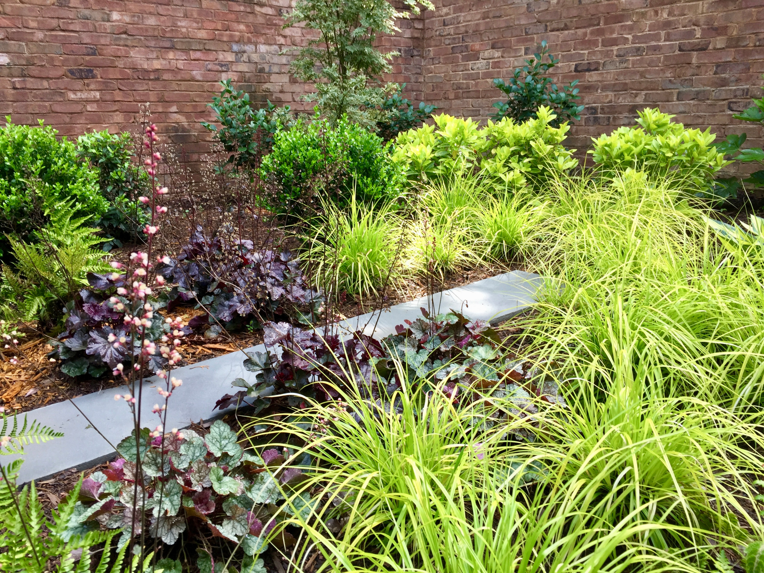 Transitional Courtyard Garden