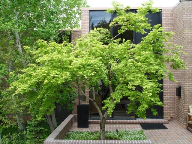 Trees Modern Landscape Salt Lake City By Pendleton Design