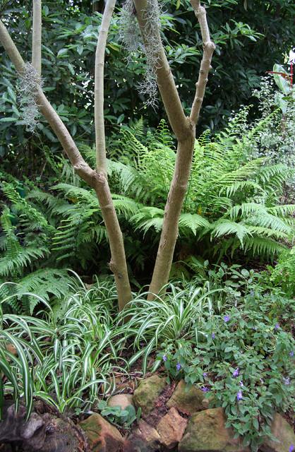 Tropical Forest tropical-landscape