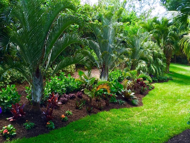 Tropical front & backyard landscapes....Palms & Color ... on Palm Tree Backyard Ideas id=68270