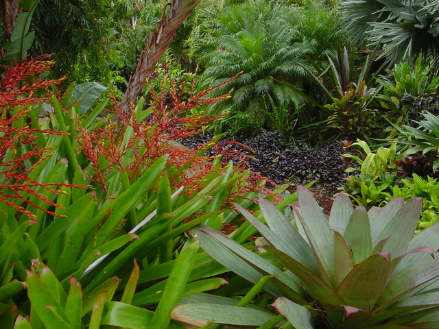 Tropical garden design contemporary landscape hawaii for Tropical garden designs