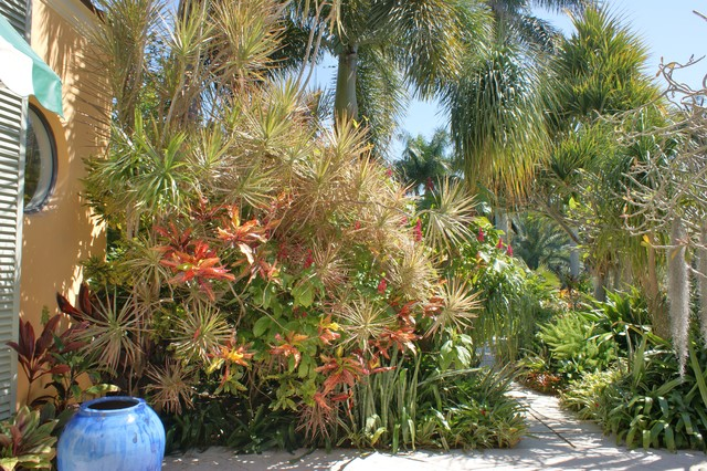 Tropical garden design tropical landscape miami by for Tropical garden designs
