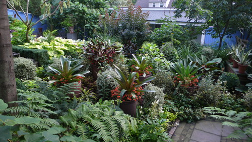 Tropical plantings tropical landscape