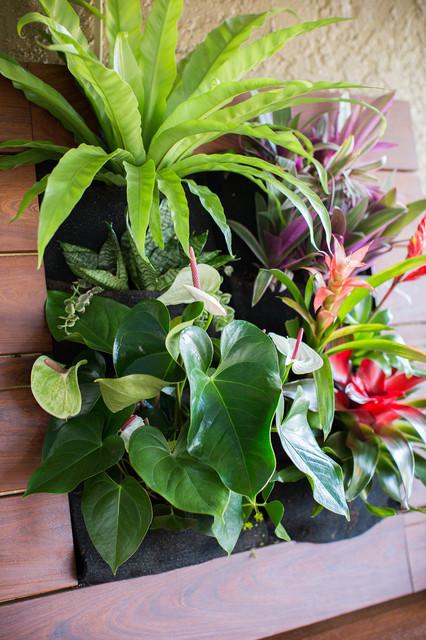 Vertical Gardening Tropical Landscape San Diego By
