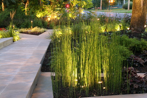 What is the name of the tall like grass bamboo for Tall outdoor grasses