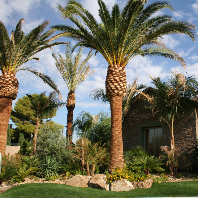 Desert tropical landscaping
