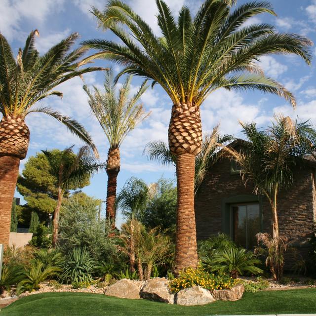 Tropical Oasis In Desert Tropical Garden Las Vegas