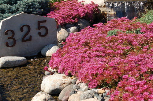 What are the bright pink ground cover flowers mightylinksfo