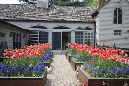 Here are a number of small raised flower beds. The red flowers are lined with smaller blue flowers which creates a leveled and interesting visual appeal.