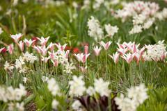 Jetzt Blumenzwiebeln pflanzen – für den Blütenrausch im Frühling!