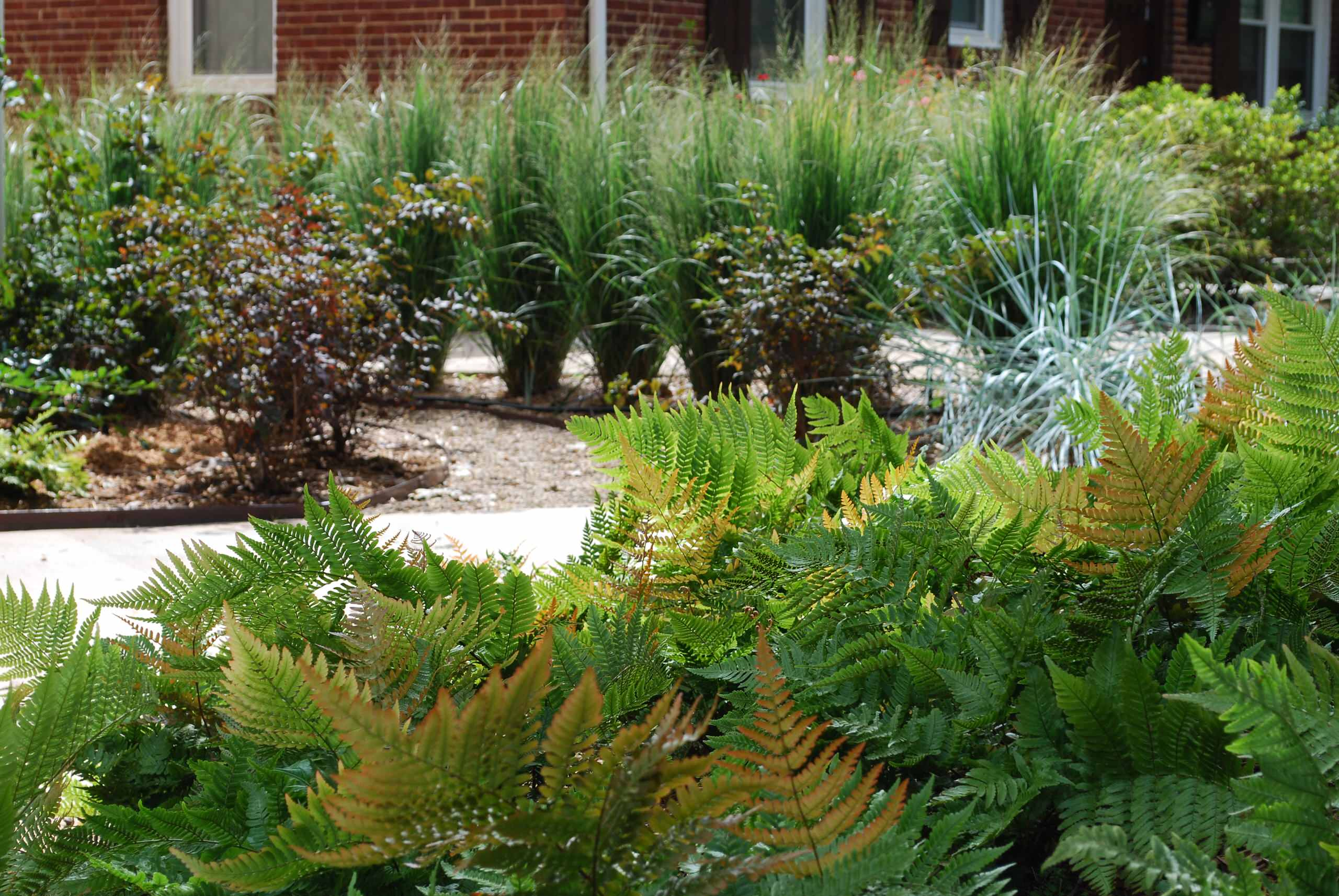 Turf-less front yard provides unexpected color and texture.