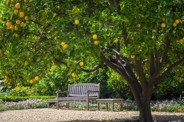 Under The Orange Tree Traditional Landscape San