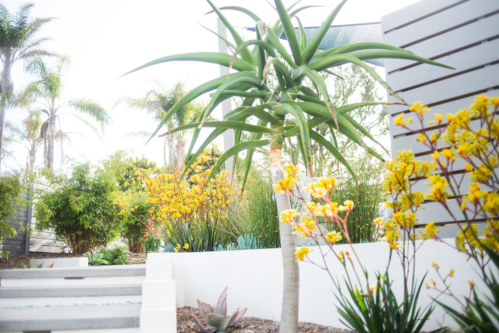 This is an example of a large contemporary drought-tolerant and full sun backyard garden path in San Diego.