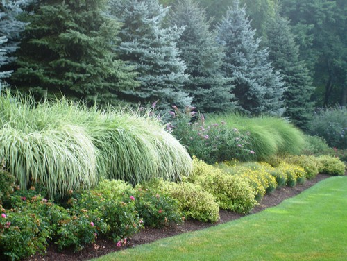 Landscaping Evergreen Trees For Privacy : Images about privacy landscaping ideas on