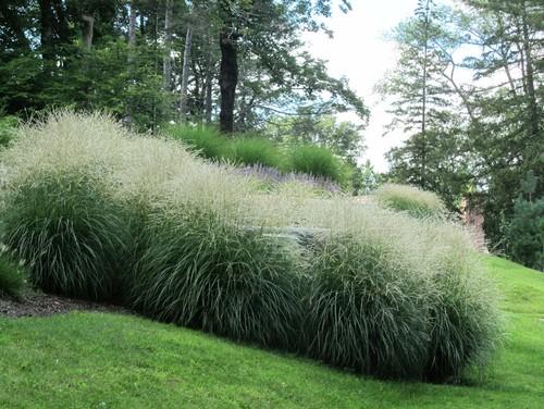 Varios Plantings