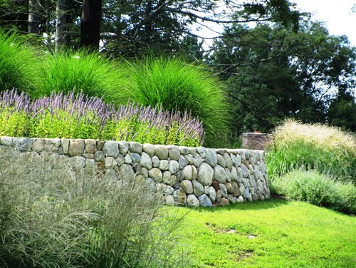 What is the tall green ornamental grass in the back behind for Long grass landscaping