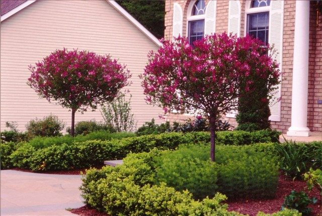 Various Plantings traditional-landscape
