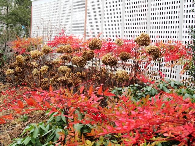 Various Plantings eclectic-landscape