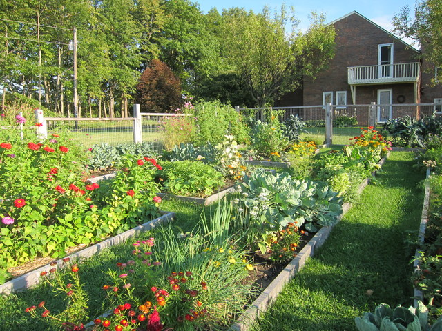 Vegetable garden for Vegetable and flower garden ideas