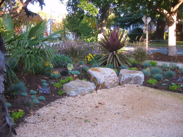 very drought tolerant low maintenance and year round