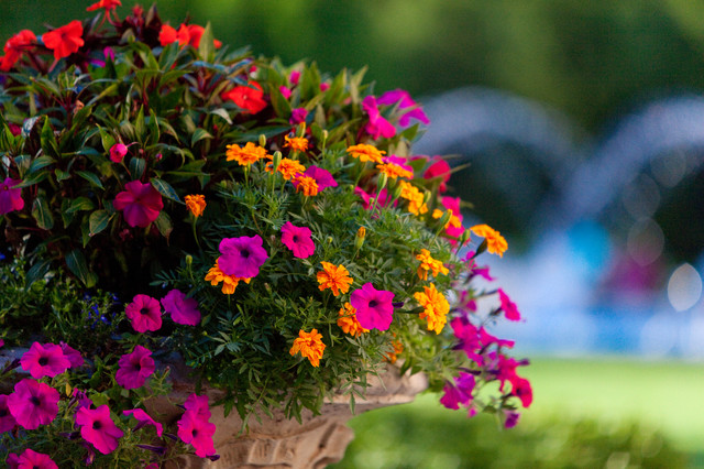 Vibrant Amp Colorful Flower Pots Gardens And Plants