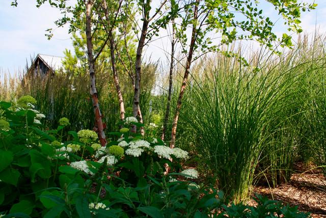 Vibrant Scenics: Garden Contemporary contemporary-landscape