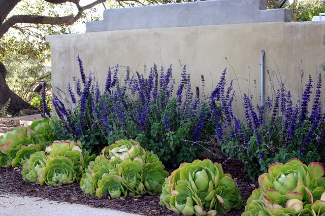 Design Ideas For A Small Contemporary Drought Tolerant And Shade Backyard Gravel Landscaping In Santa
