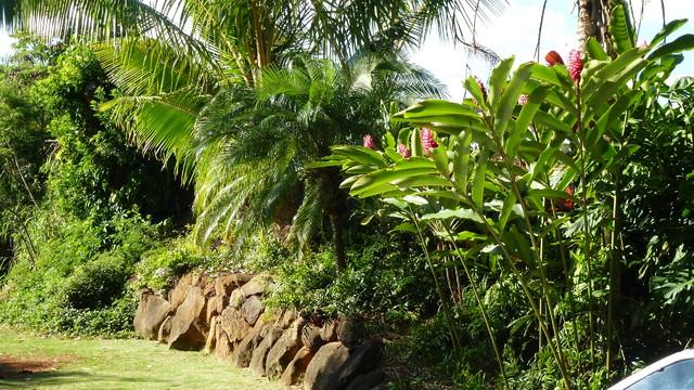 Waikalani tropical-landscape