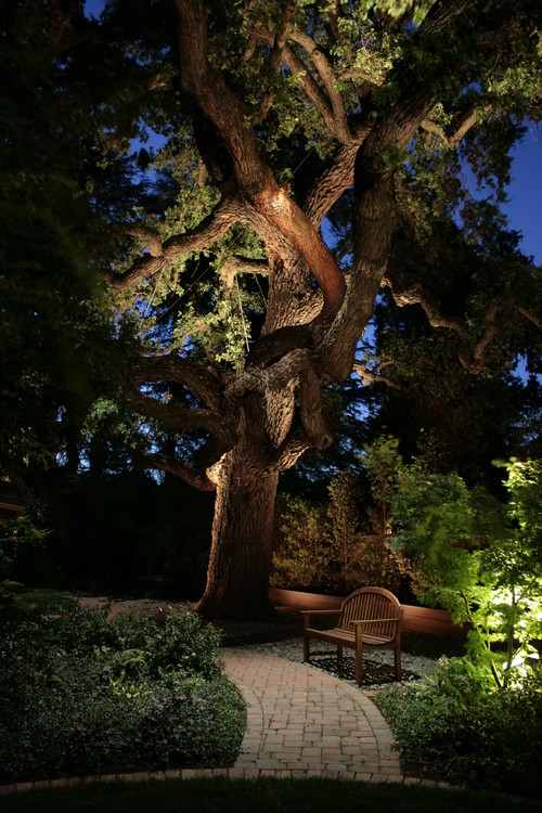 lighted walkway can be combined with landscape lighting like this beautiful tree