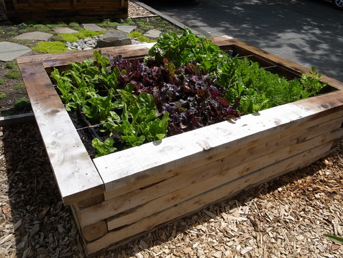 How to Build a Raised Bed for Your Veggies and Plants 2