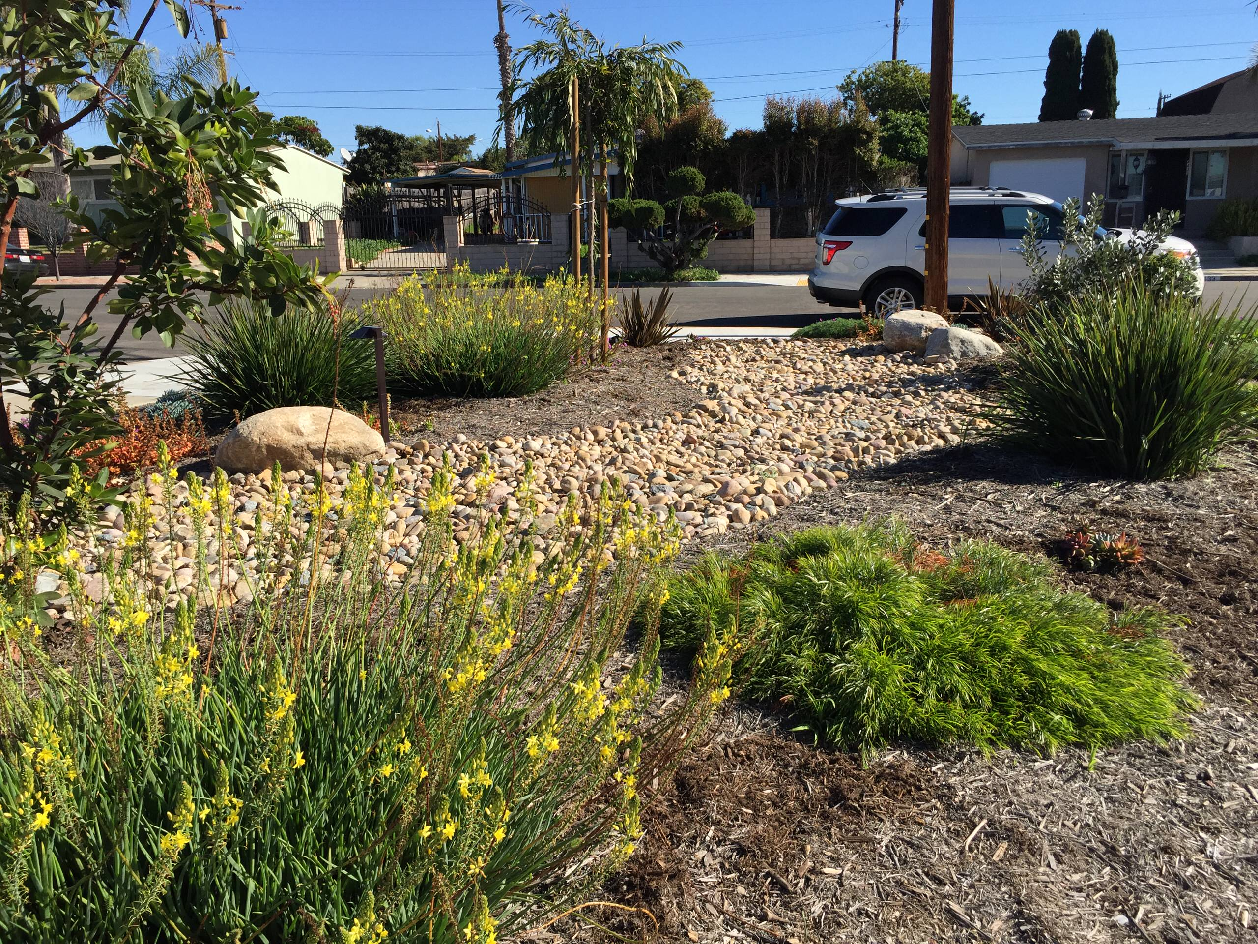 Water-Wise Dry Stream Bed Garden