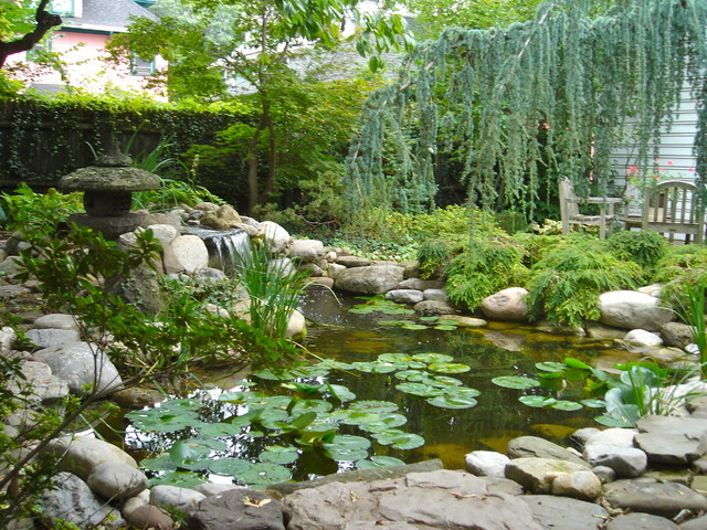 waterfall fish ponds renovations and redesign or rebuild in