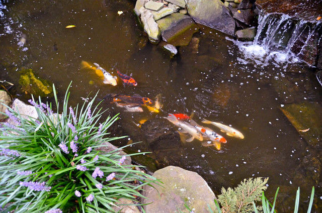 Waterfall koi pond thornwood ny modern landscape for Modern koi pond design photos