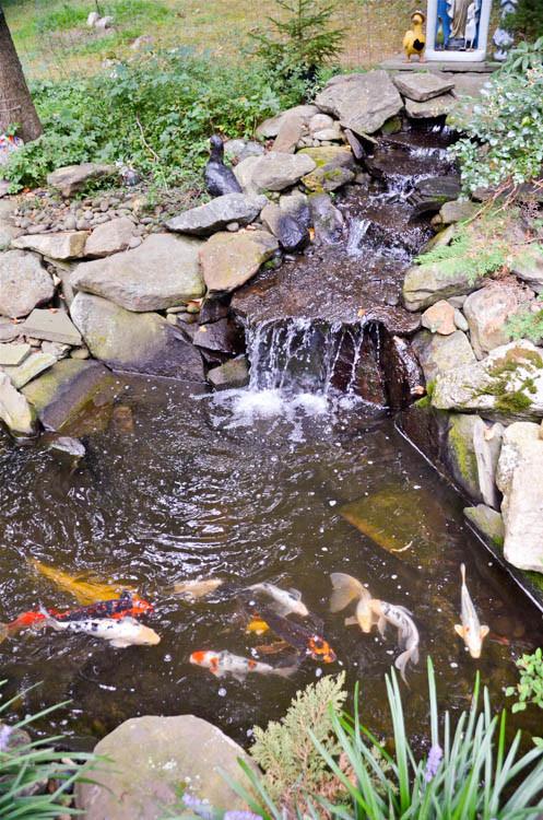 Waterfall | Koi Pond | Thornwood NY