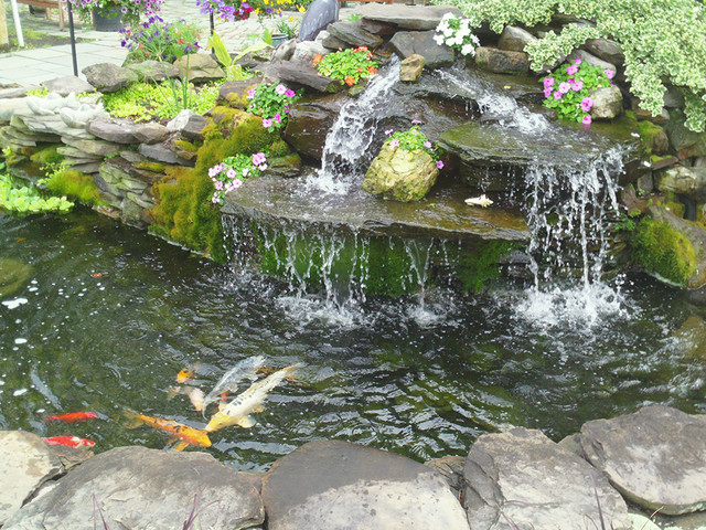 Waterfall pond with koi fish contemporary landscape for Coy fish pond designs