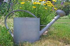 Cómo regar las plantas en verano: Evita los errores más comunes