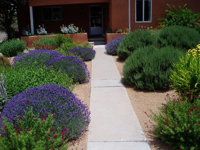 Waterwise Landscapes contemporary-landscape - Waterwise Landscapes - Contemporary - Landscape - Albuquerque - By