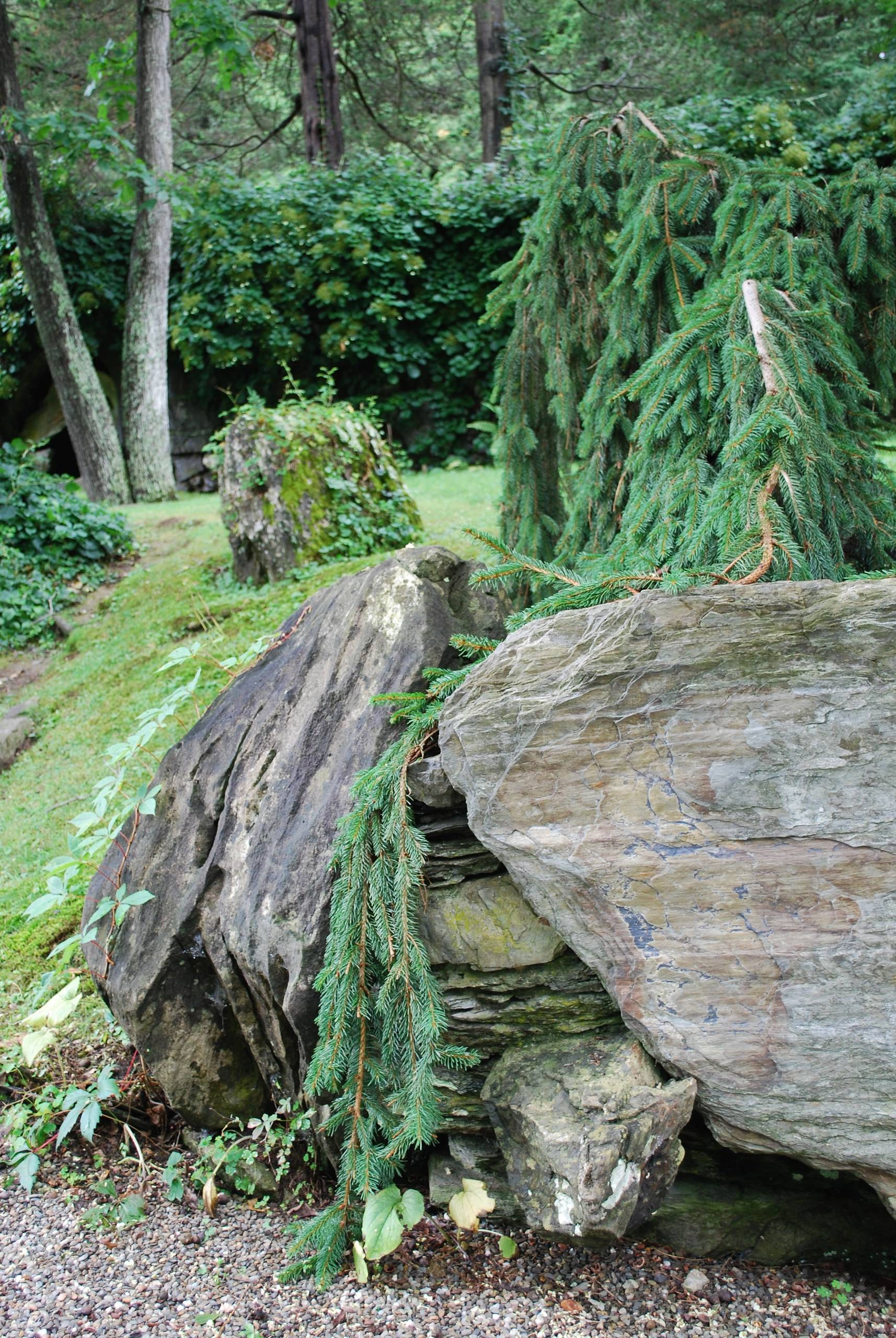 Weeping Norway Spruce and Boulder at Innisfree