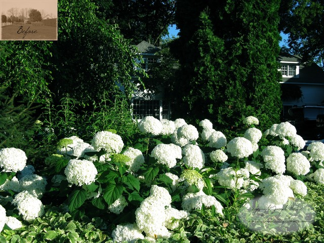 White Theme Garden in Warwick, NY traditional landscape
