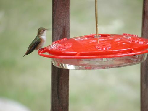 Squirrel Proof SquirrelAway Bird Cafe - Inicio