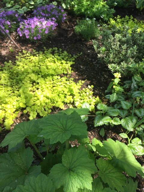 Williamsburg Shady Perennial Garden Design Garden New York