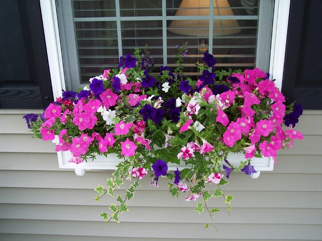 Window Box traditional-landscape