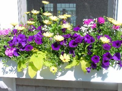 Window Boxes and Containeers traditional-landscape
