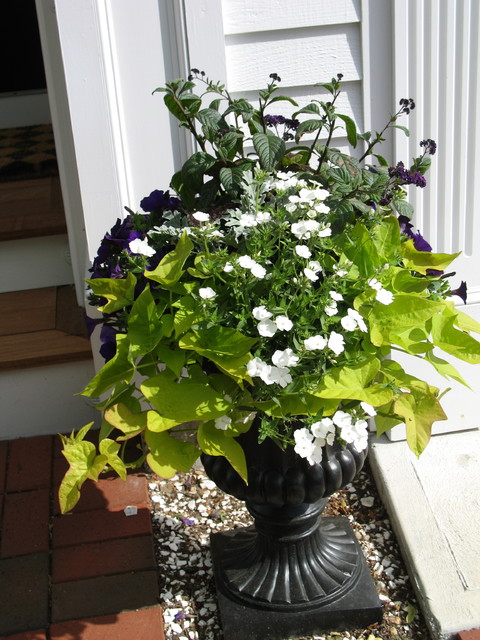 Window Boxes and Containers traditional-landscape