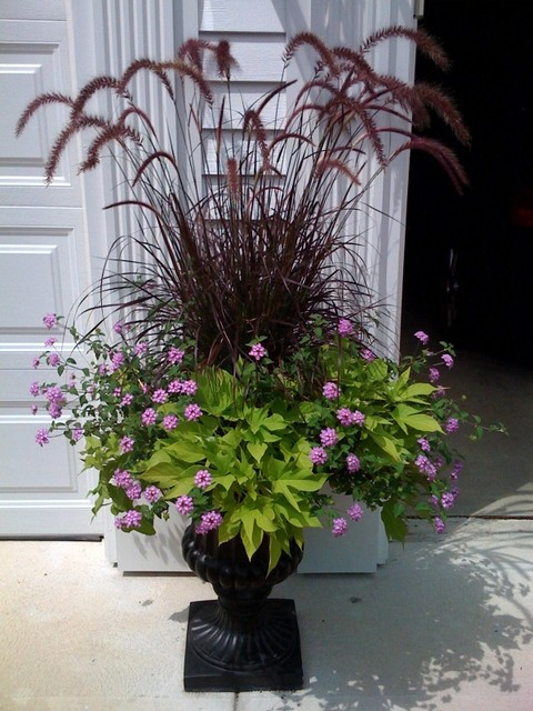 Great Design Plant Purple Fountain Grass