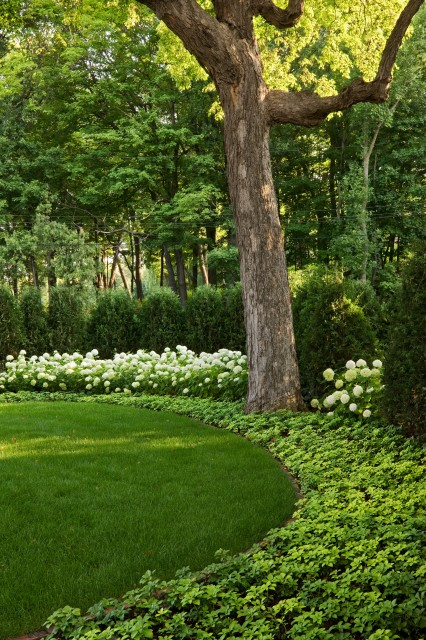 Inspiration for a traditional shade backyard landscaping in Minneapolis.